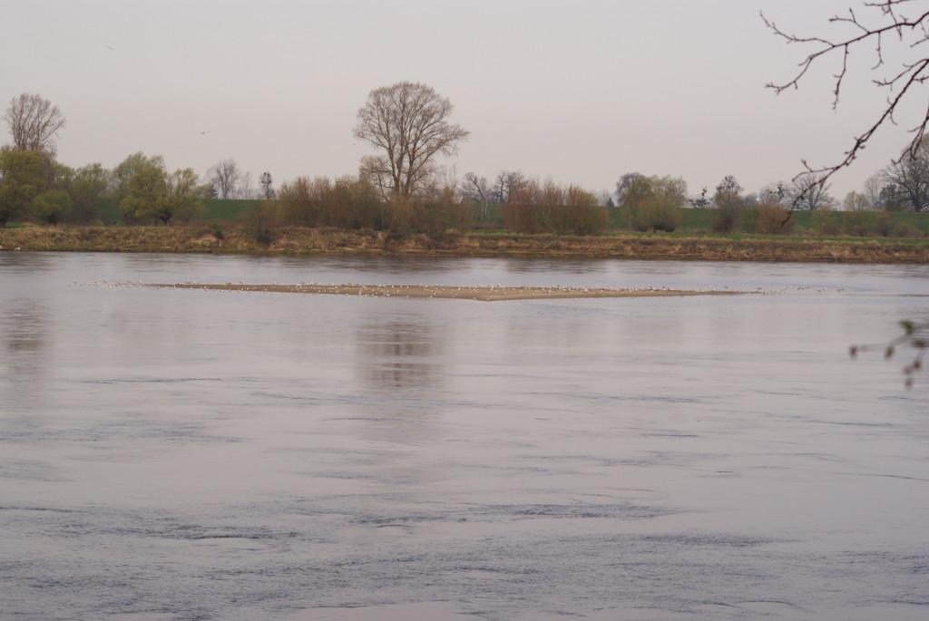 Duża łacha pod Grudziądzem 844 km. Fot. Roman Grzebiński